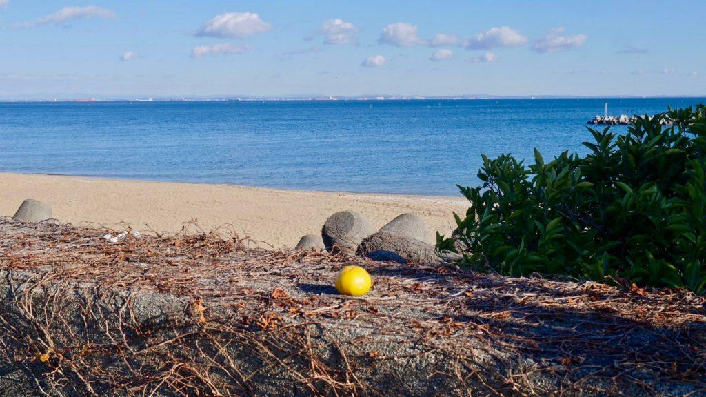 若松の海岸