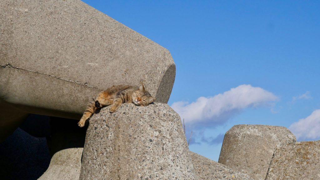 若松海岸の猫