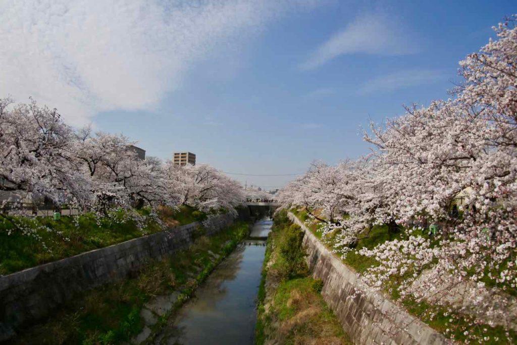 山崎川の桜 2018年3月27日