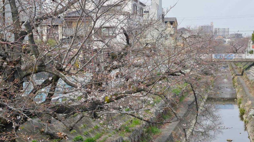 山崎川の桜 2019年3月27日