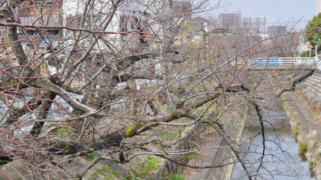 山崎川の桜 2019年3月22日